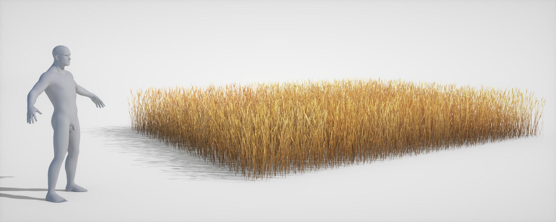 Jordi van hees wheat field