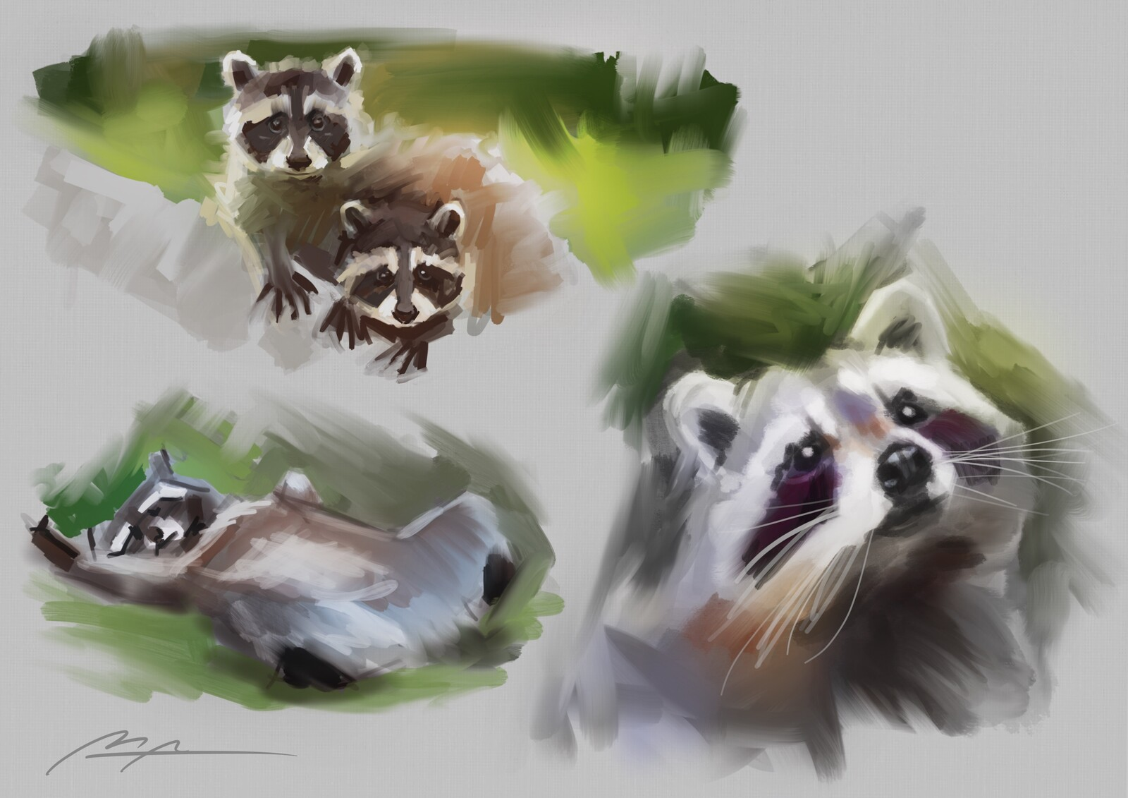 Raccoon sketches