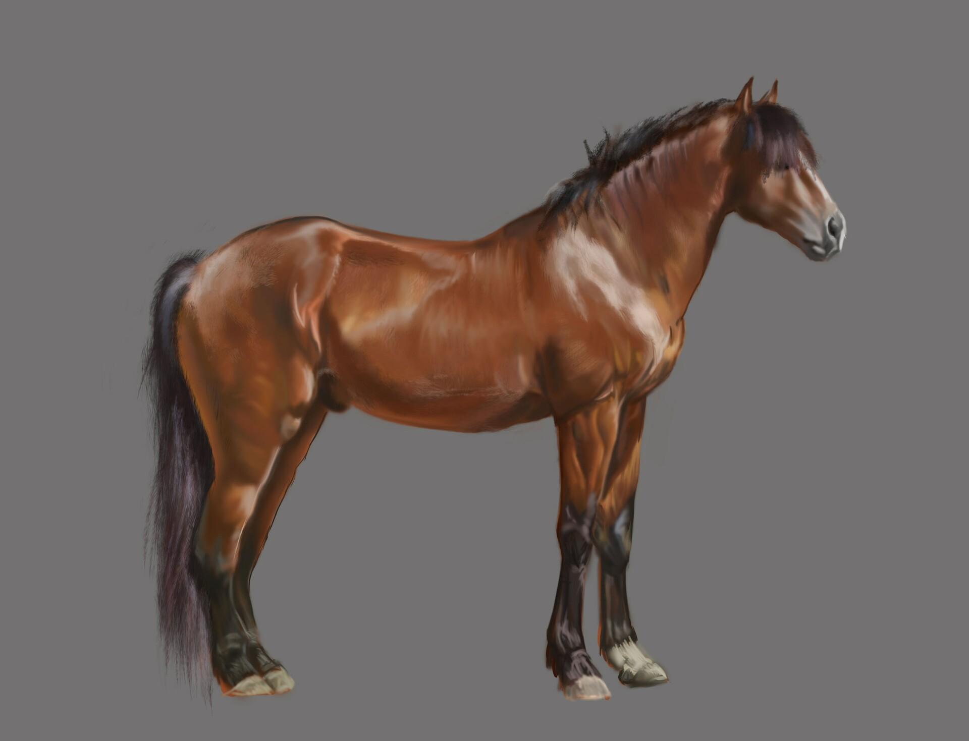 práctica de estudio de anatomía y color animal de un caballo