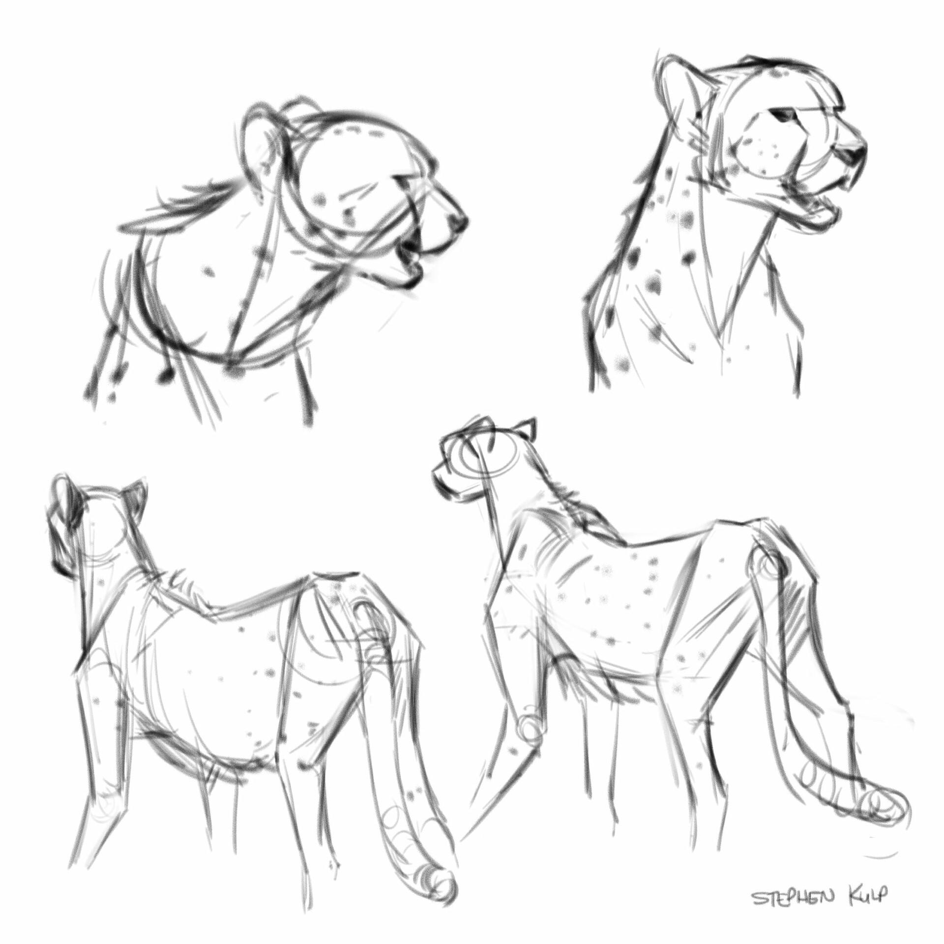 Stephen kulp cheetah sketch2