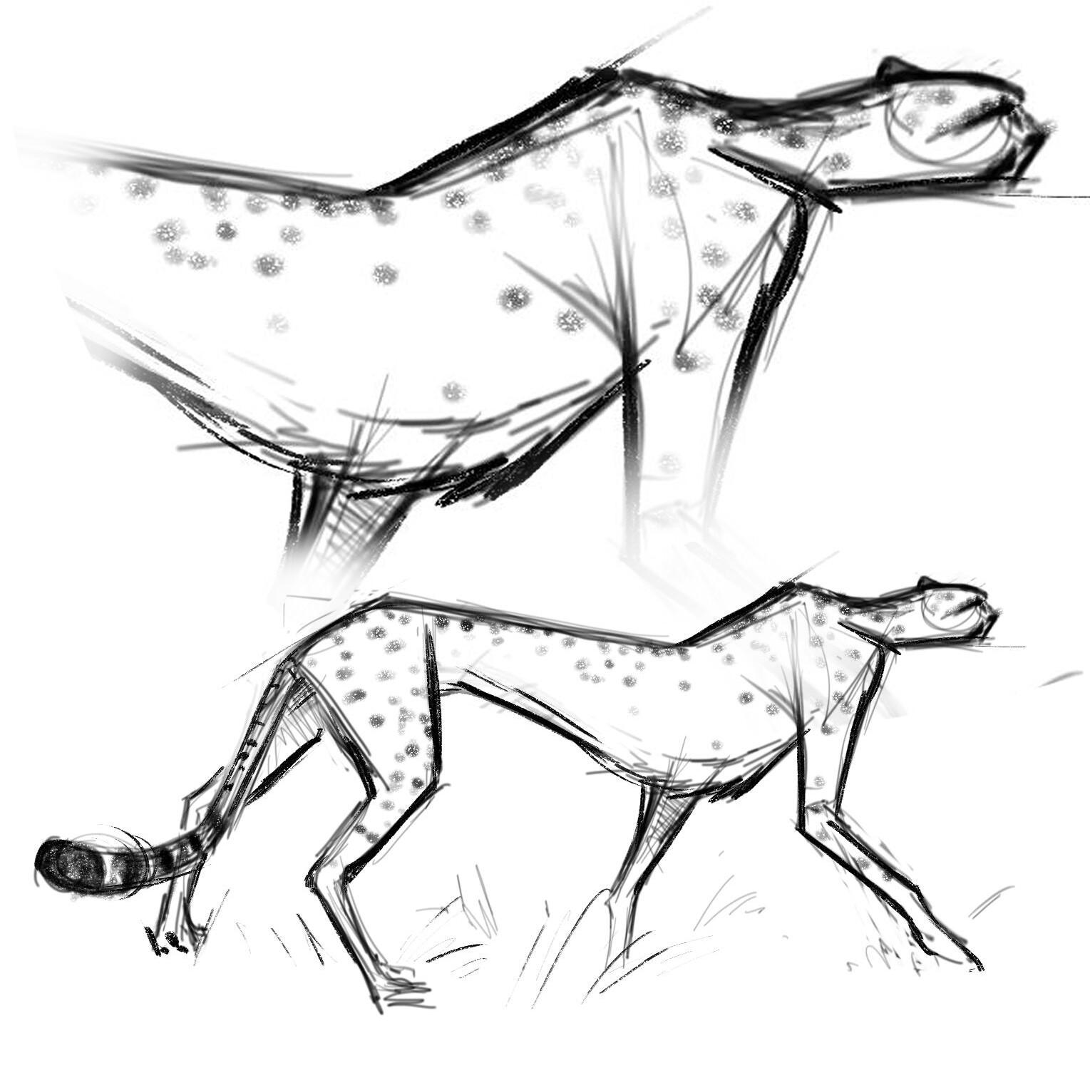 Stephen kulp cheetah sketch