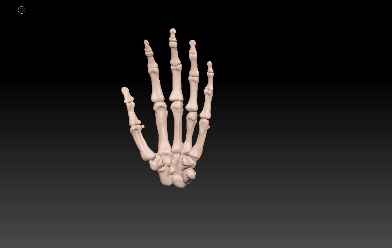 Didactic 3D Model of bony anatomy of the hand