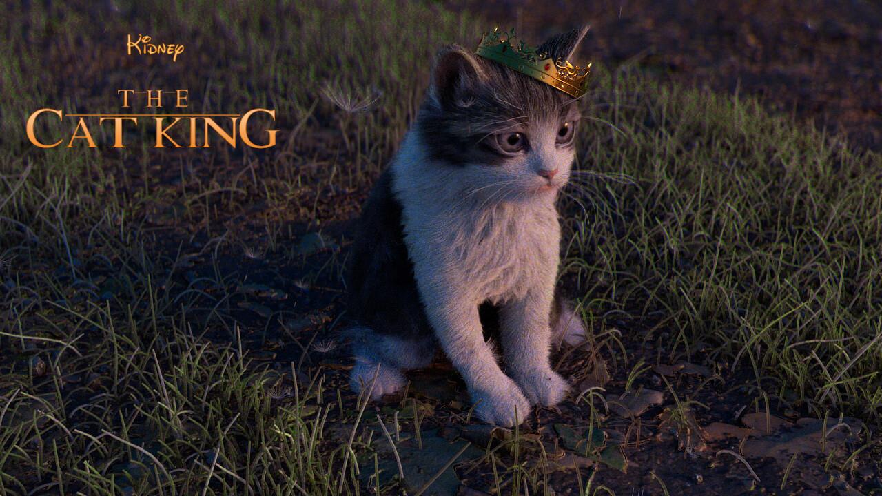 Yasin hasanian kitten d