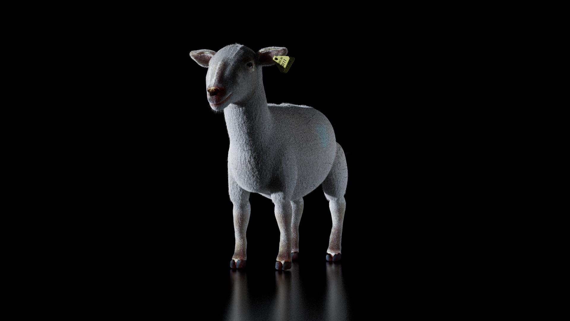 Michelangelo girardi sheep ig2