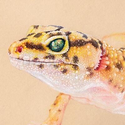 Bruno azinheiro gecko