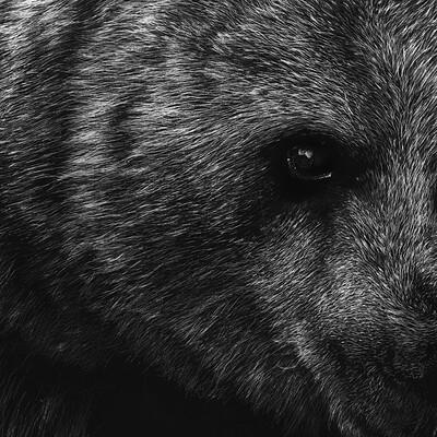 Bruno azinheiro urso