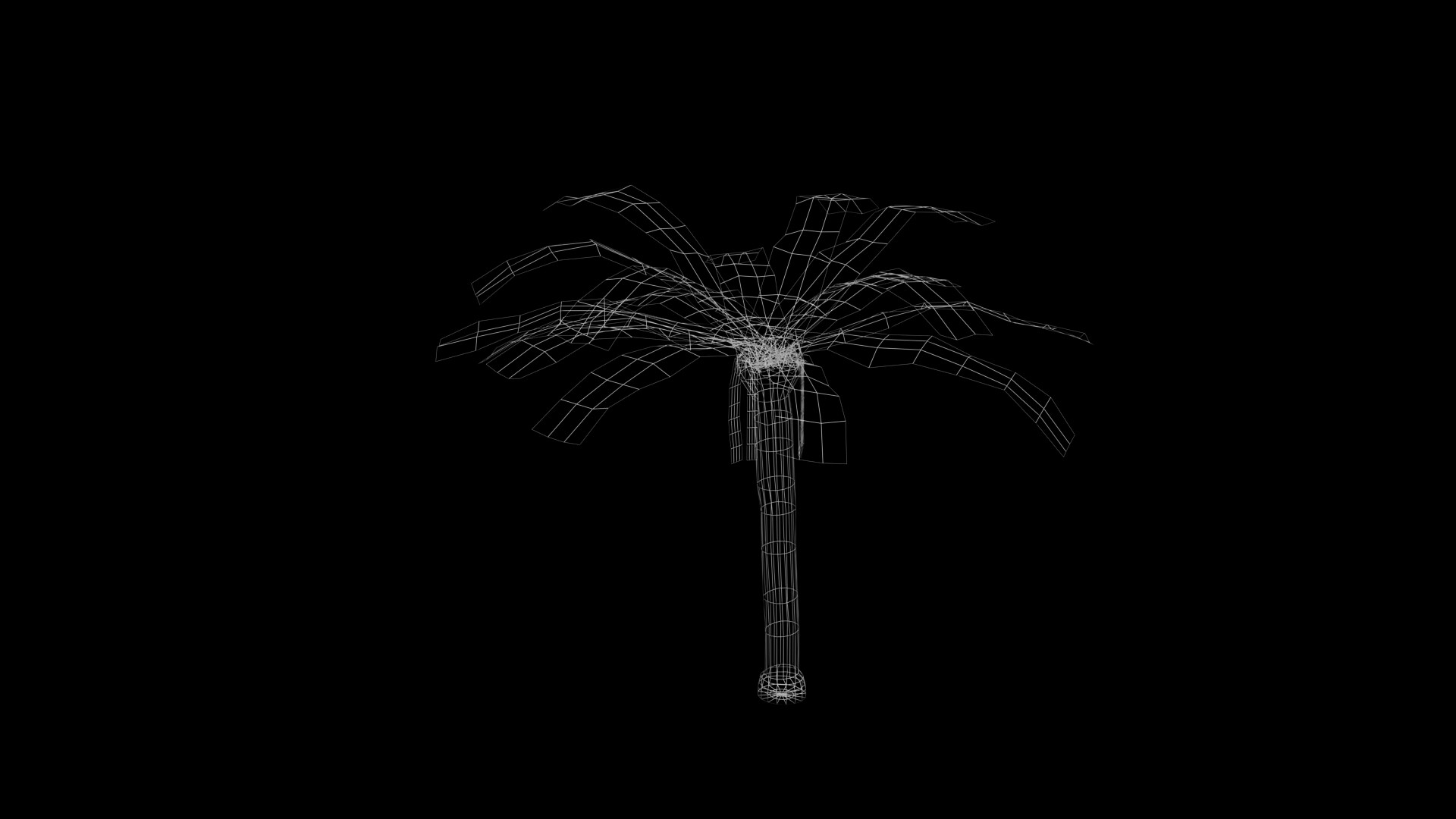 James skinner palm tree wireframe