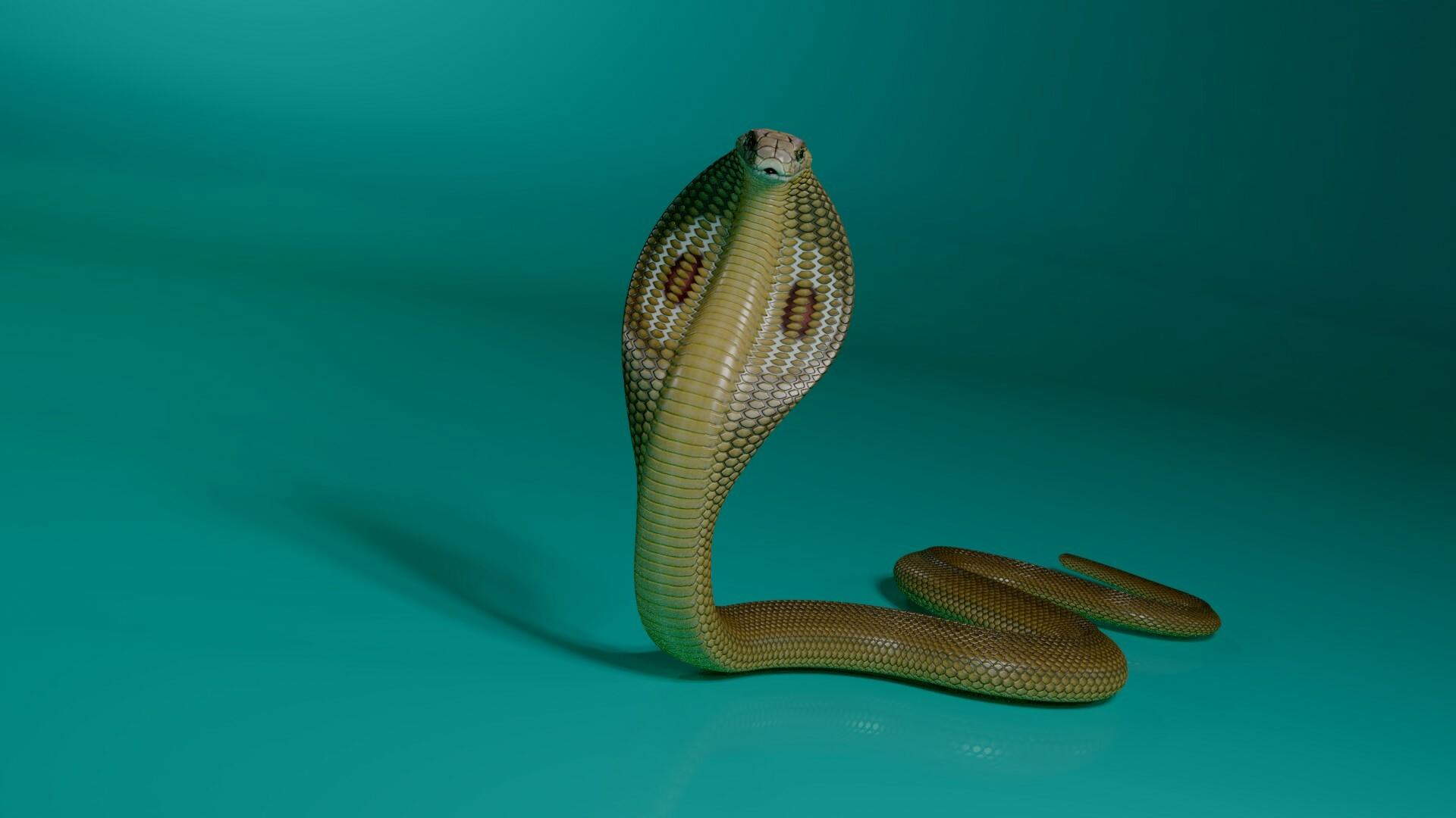 stephan plotnicov 3d model cobra snake 02