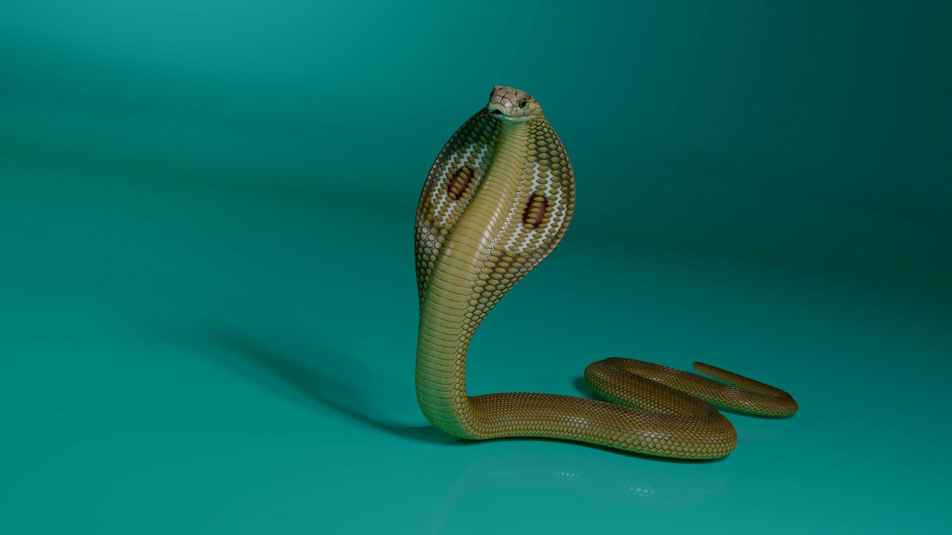 ArtStation - The 3d model of king cobra, Stephan Plotnicov