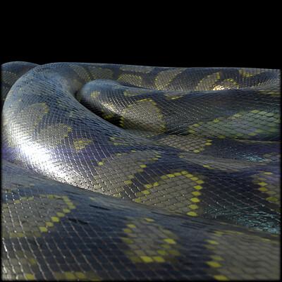 Nicolas albrecht snake python