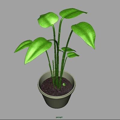 Holly cyprien house plant 2nd