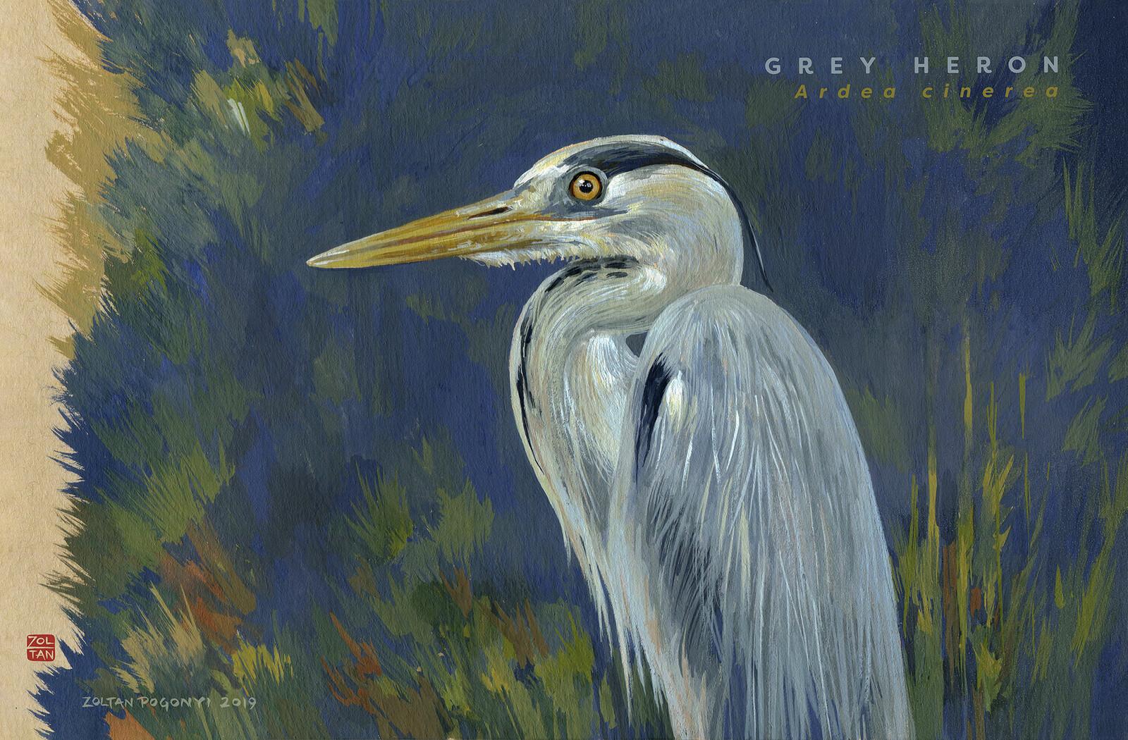 Grey heron (Ardea cinerea))