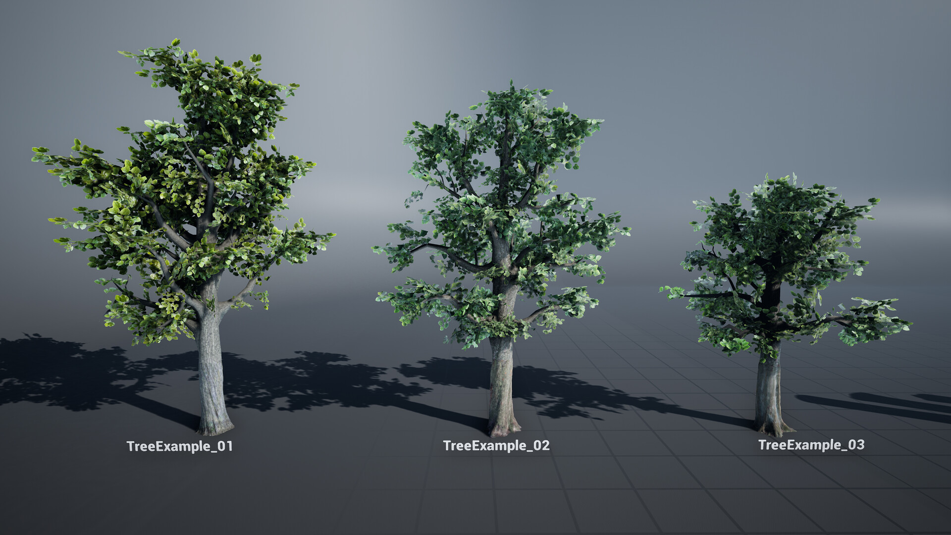 Trees created using the unique trunks, tiling textures and unique branches, all scanned.