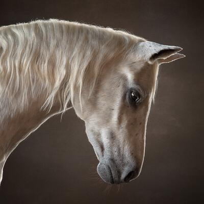 Jordan soler amp felix ferrand horsestudio001