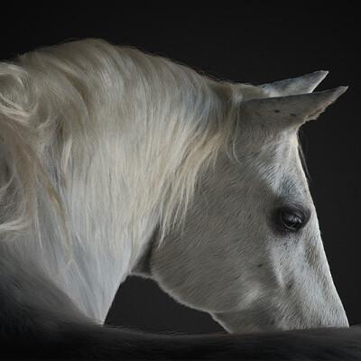 Jordan soler amp felix ferrand horsestudio002