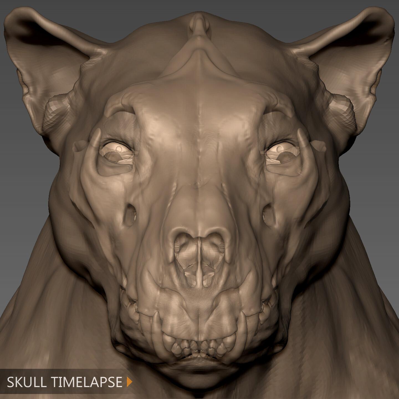 Lion - skull