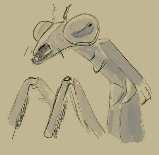 Fabrice laffont insecte1