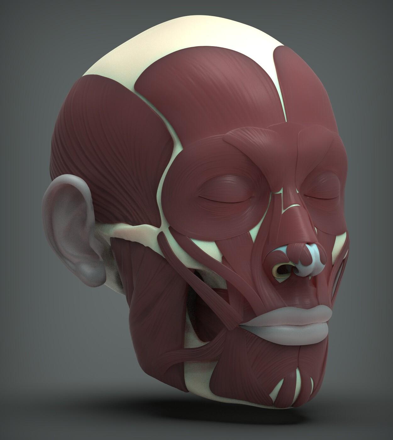 John deriggi face human anatomy 02a