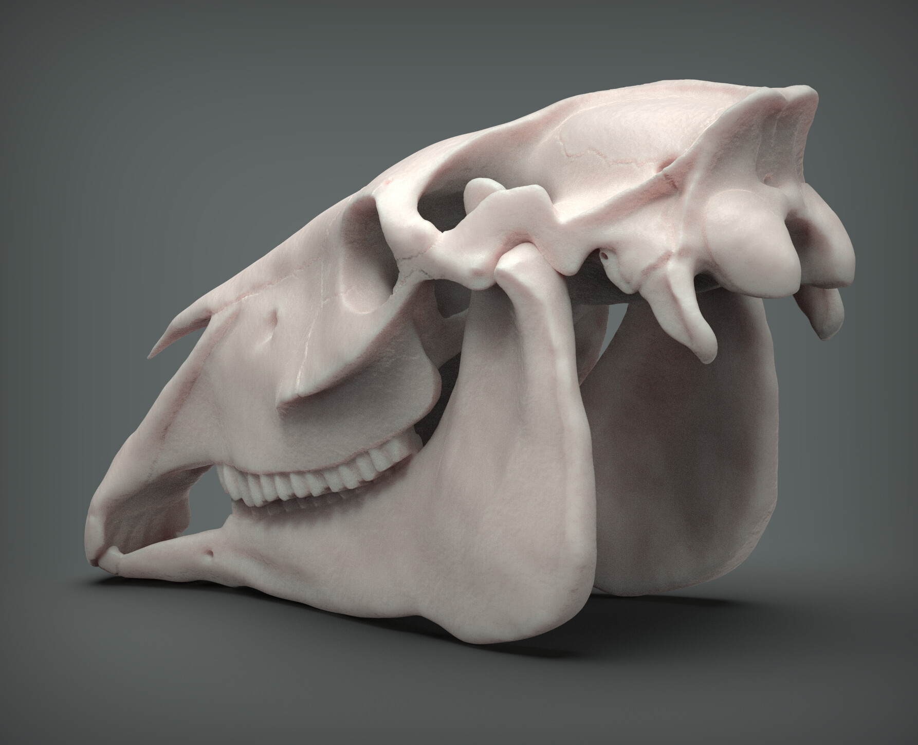 John deriggi horse skull02