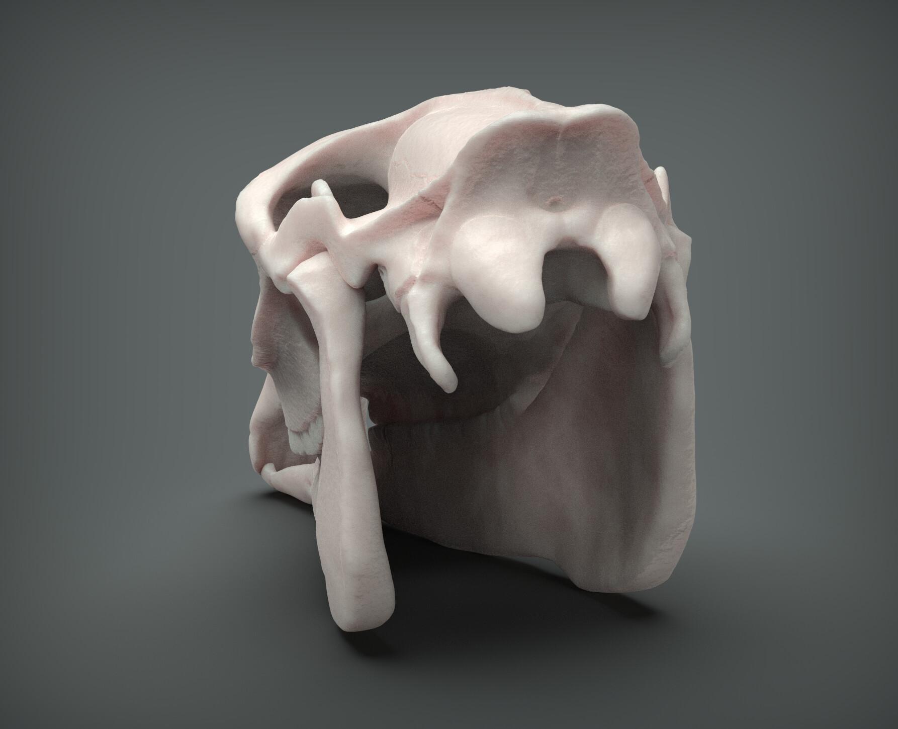 John deriggi horse skull04