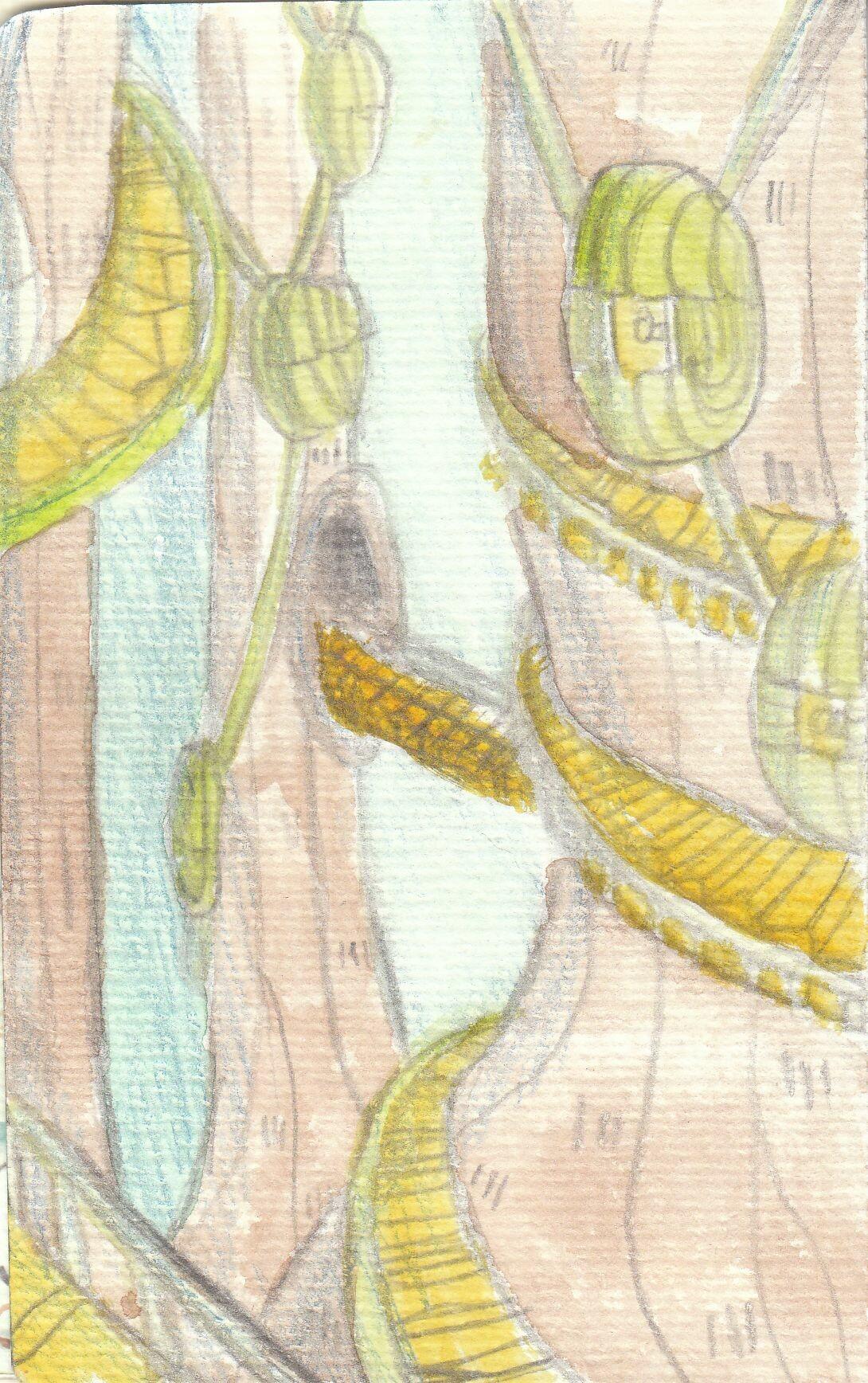 Anei ragdowl cd nouvelle civilisation arbres habitats