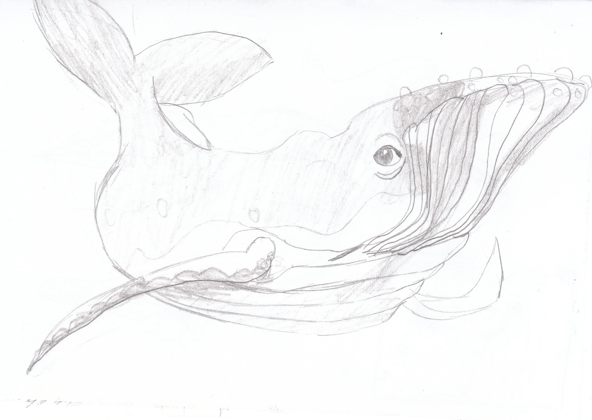 Anei ragdowl cd croquis d observation baleine