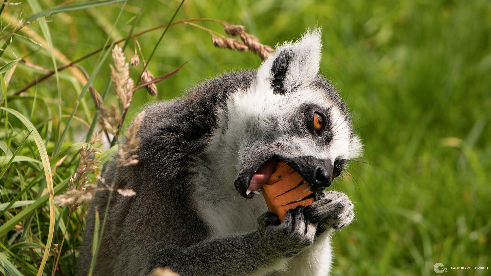 Thomas woodward wildlife park 41