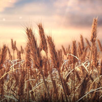 Roman boichuk wheat 4 3