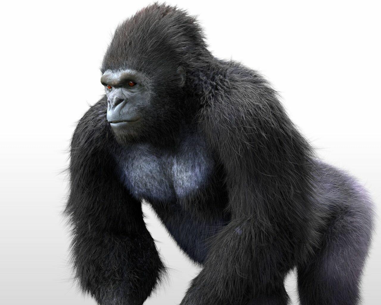 ArtStation - Gorilla 3d model, Mahi Singh