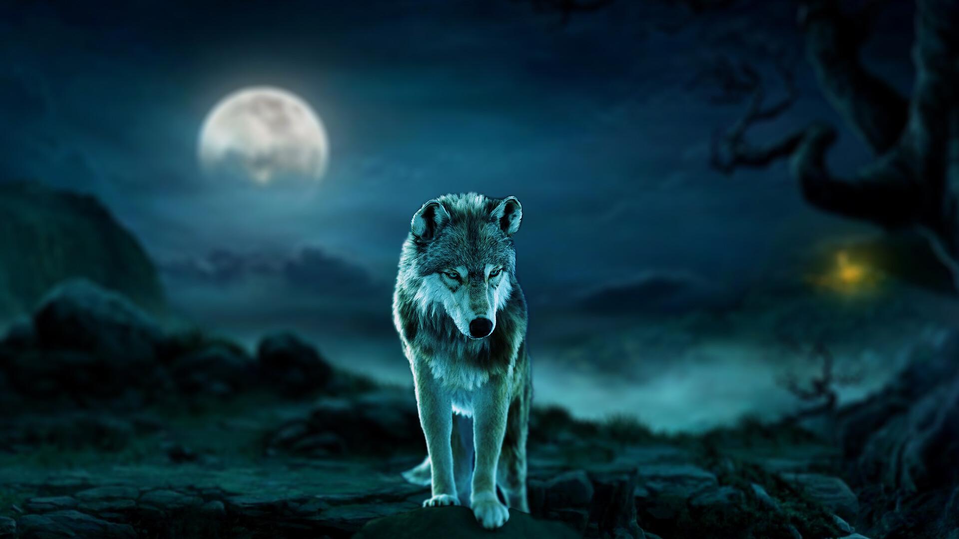 Artstation Dire Wolf In Moonlight Amanz Galzor