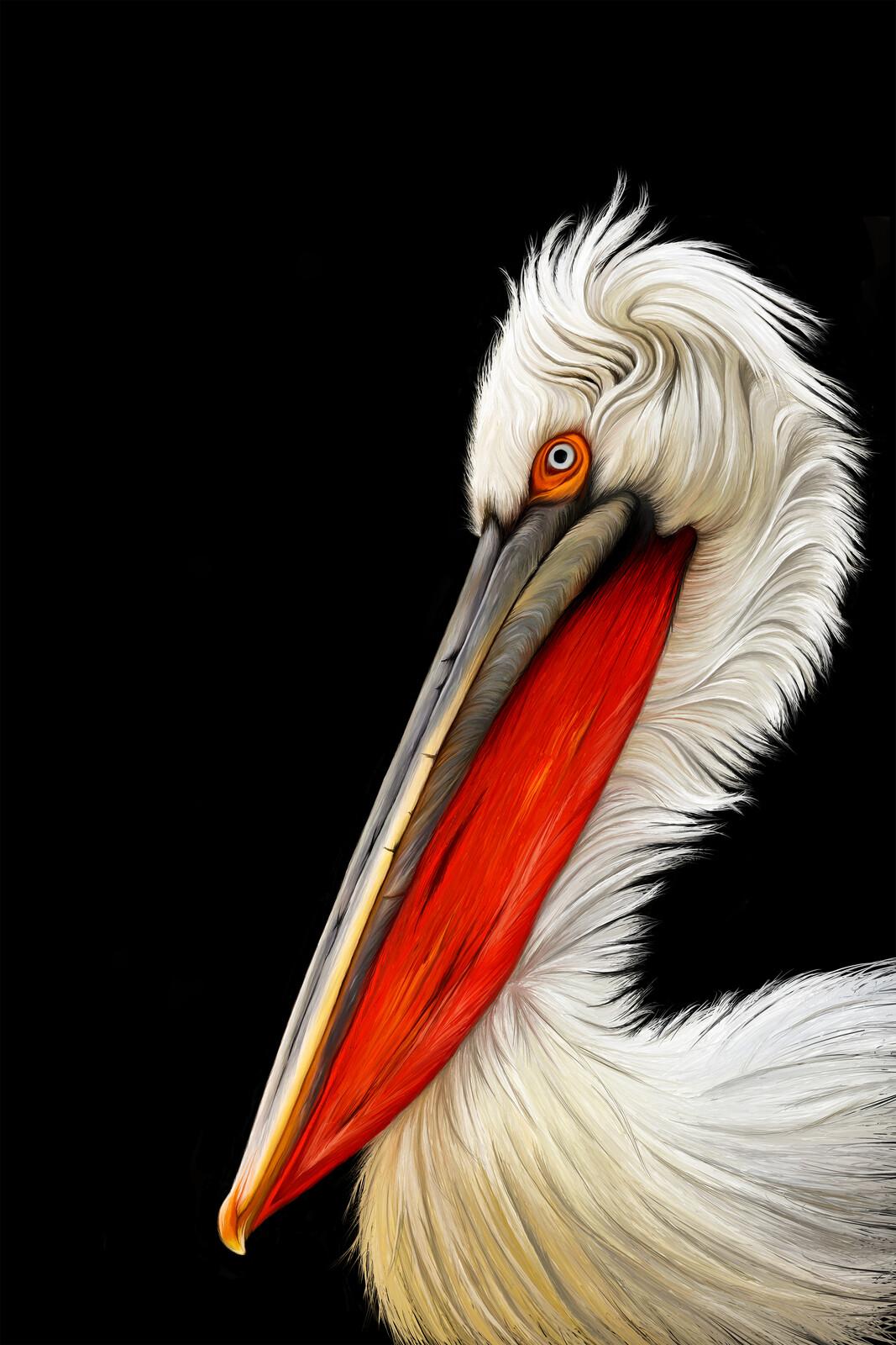 The Dalmatian Pelican - Painting