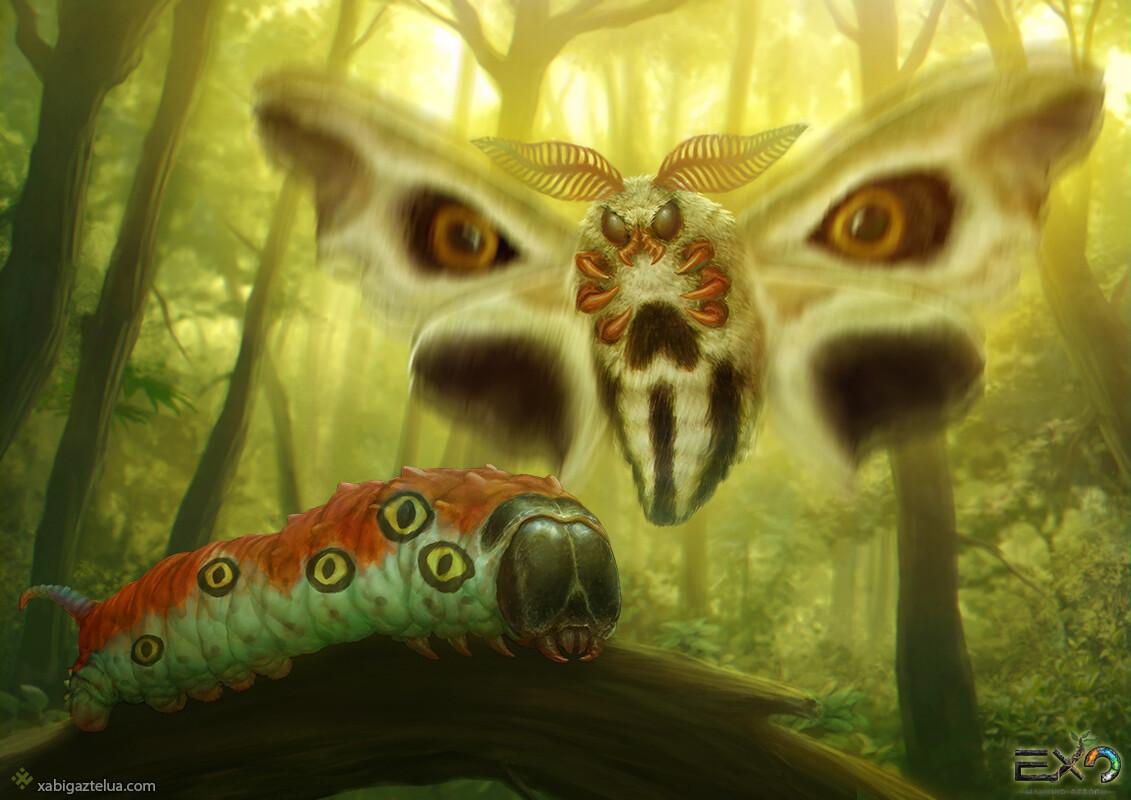 Xabi gaztelua caterpillar and moth low
