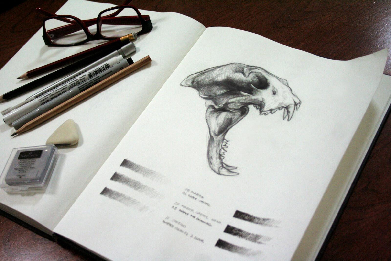 Skull study.
