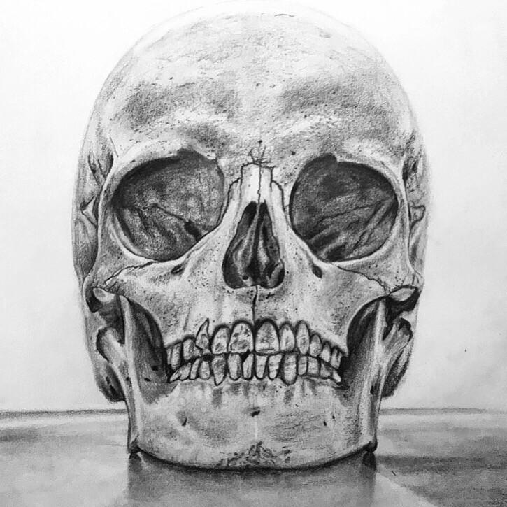 Skull, pencil drawing