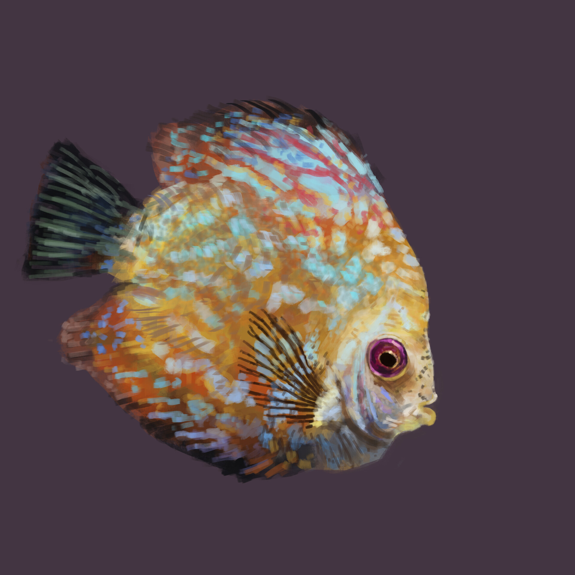 26 Reference: https://cdn.pixabay.com/photo/2016/12/31/21/22/discus-fish-1943755_960_720.jpg