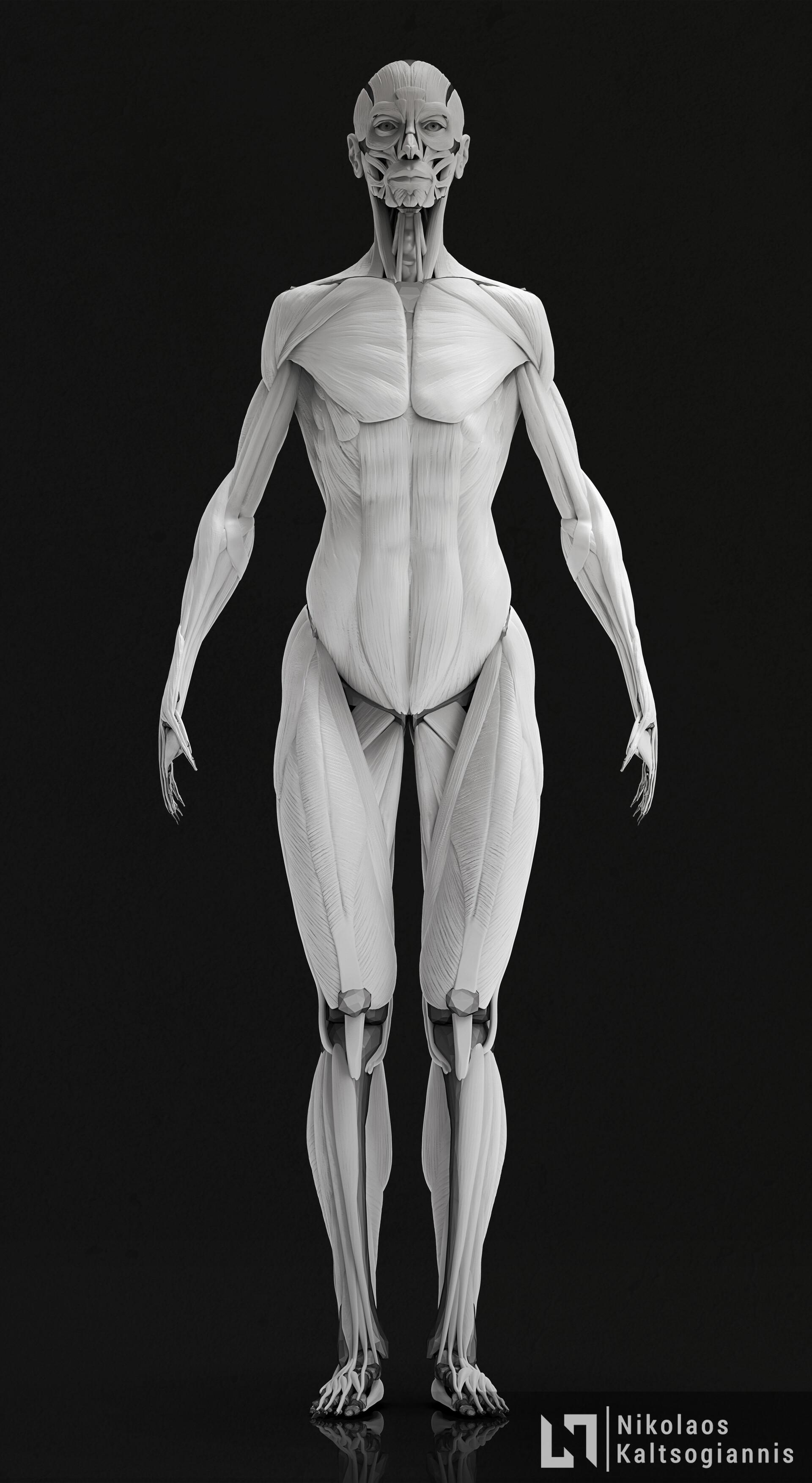 Nikolaos kaltsogiannis female anatomy echorche 02