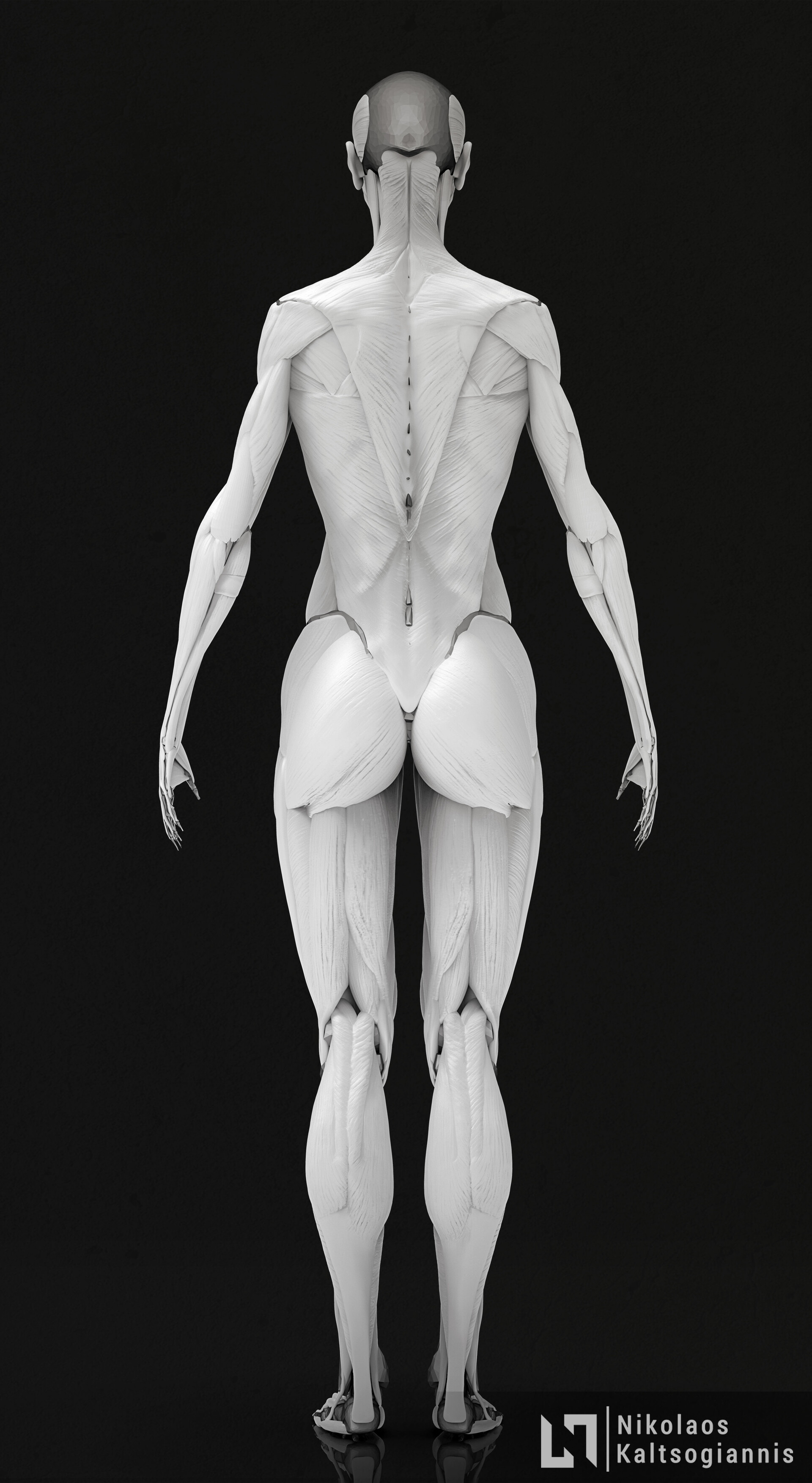 Nikolaos kaltsogiannis female anatomy echorche 04