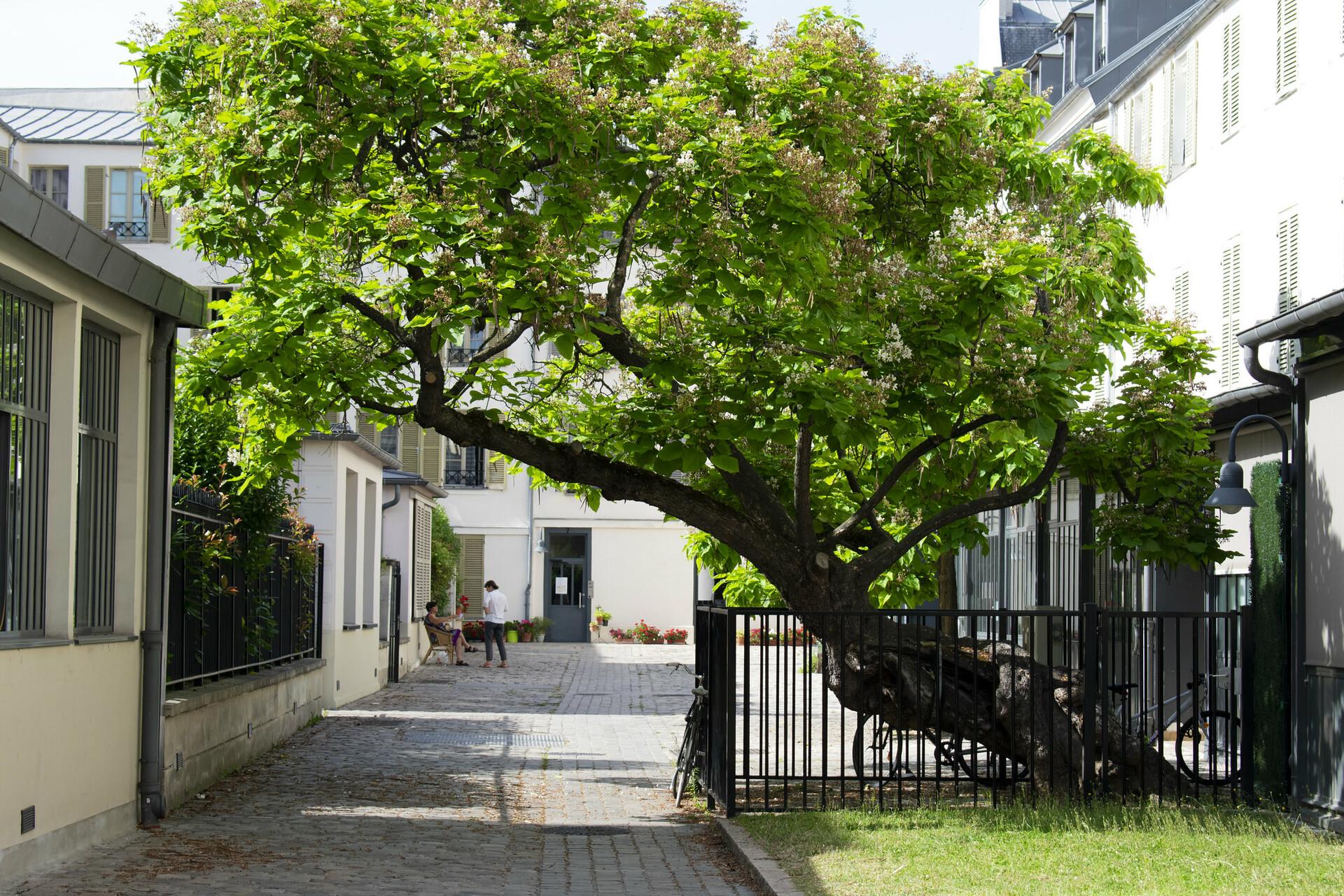 Aesthetic tree