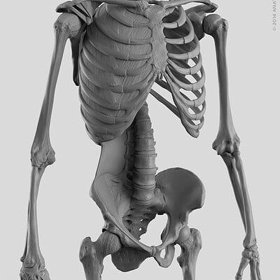 Matt corcoran anatomytools skeleton torso closeup 1