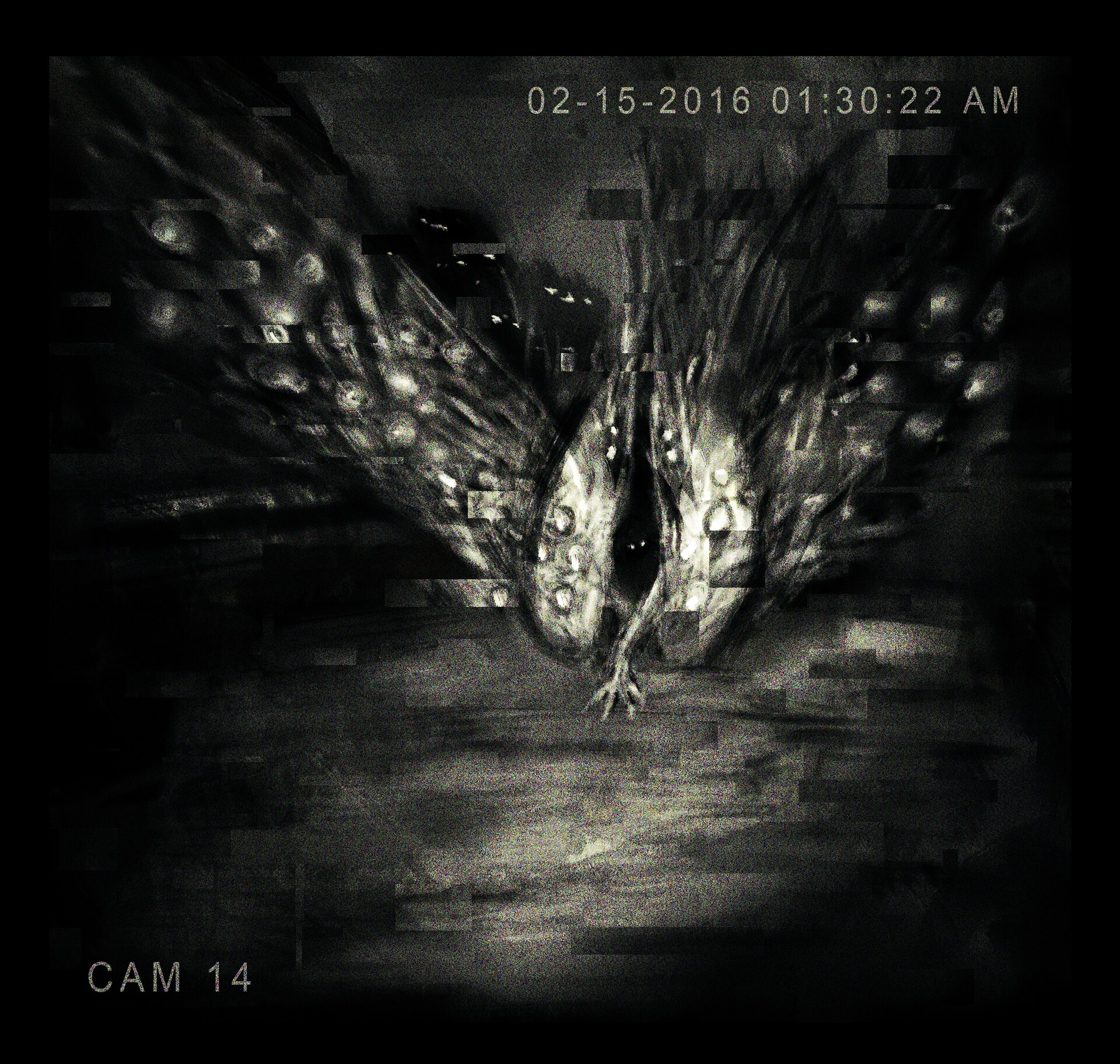 Rooftop cameras have picked up footage of an entity (several?) trying to enter the church.  We assume that they are drawn to the anomaly. Measures have been taken to keep the entities from breaching the containment area.
