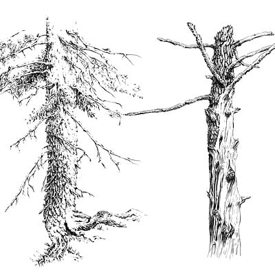Elwira pawlikowska trunk 03 pr