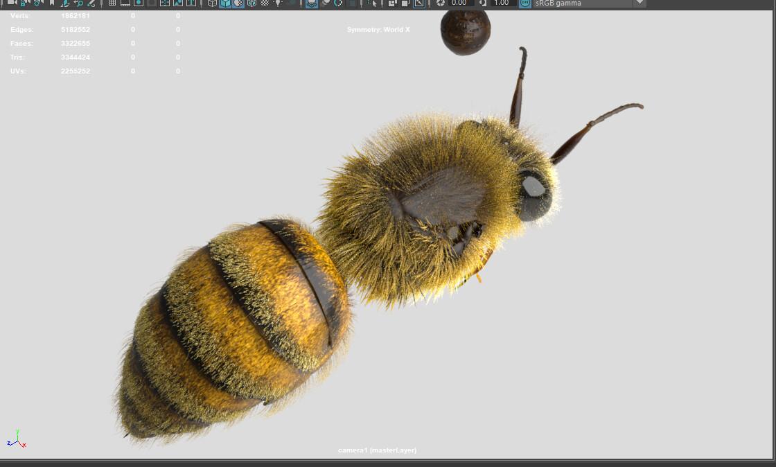 test render of fur. older version of antennae