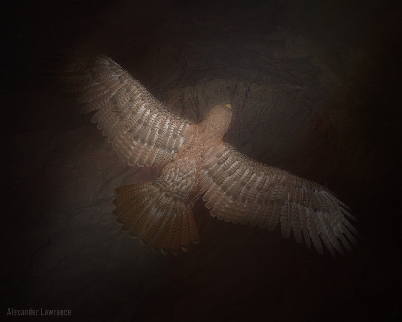 Red-Tailed Hawk Model