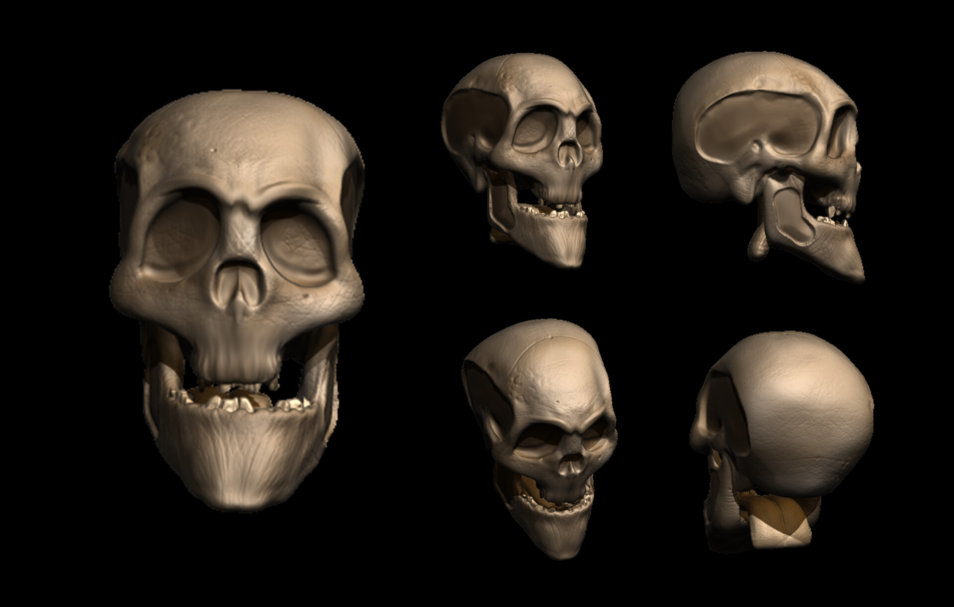Stylised human skull with textures