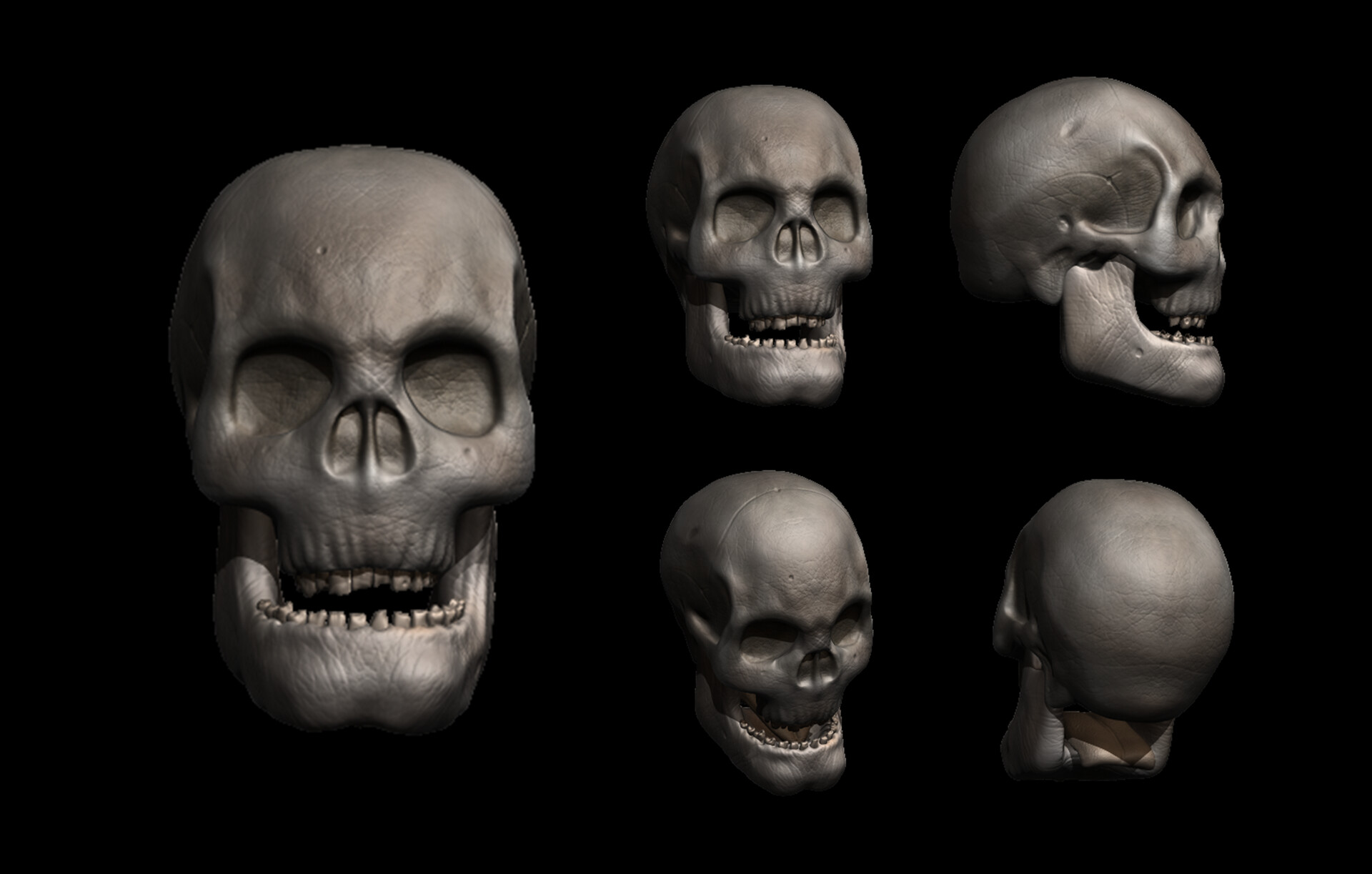Realistic human skull with textures