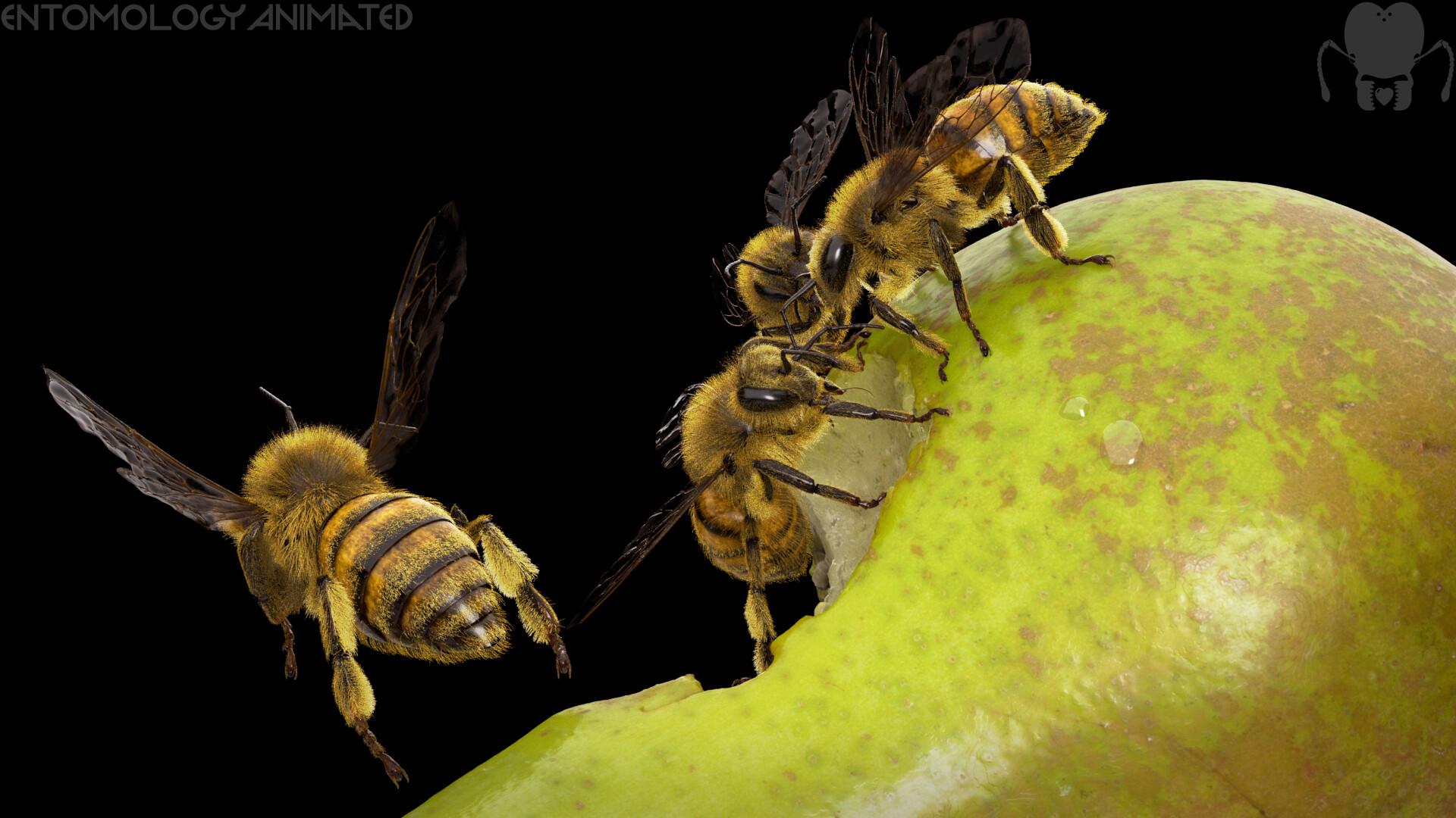 Eric keller arnold pear render 5