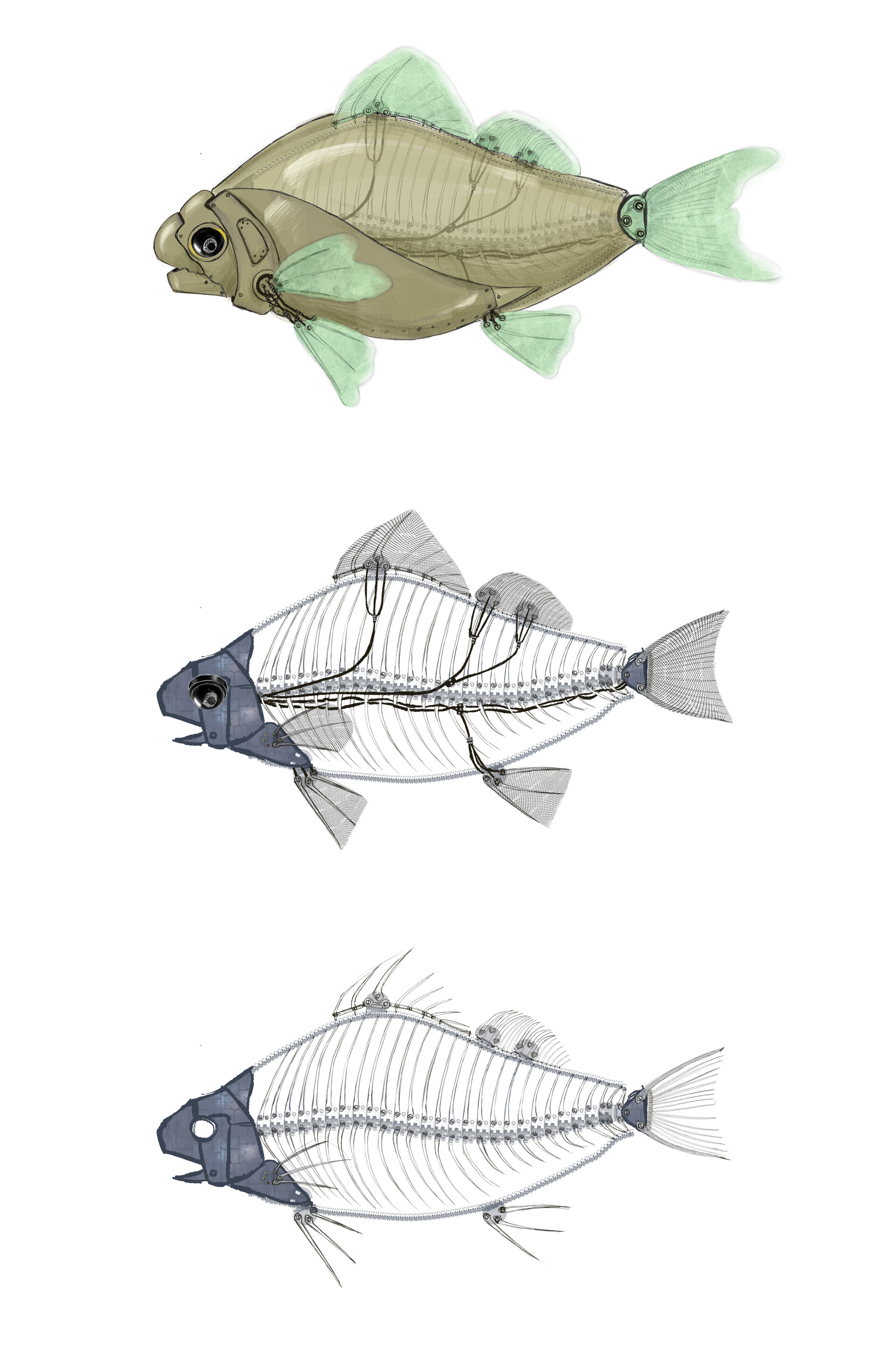 Elisa moriconi pesce rosso meccanico fasi