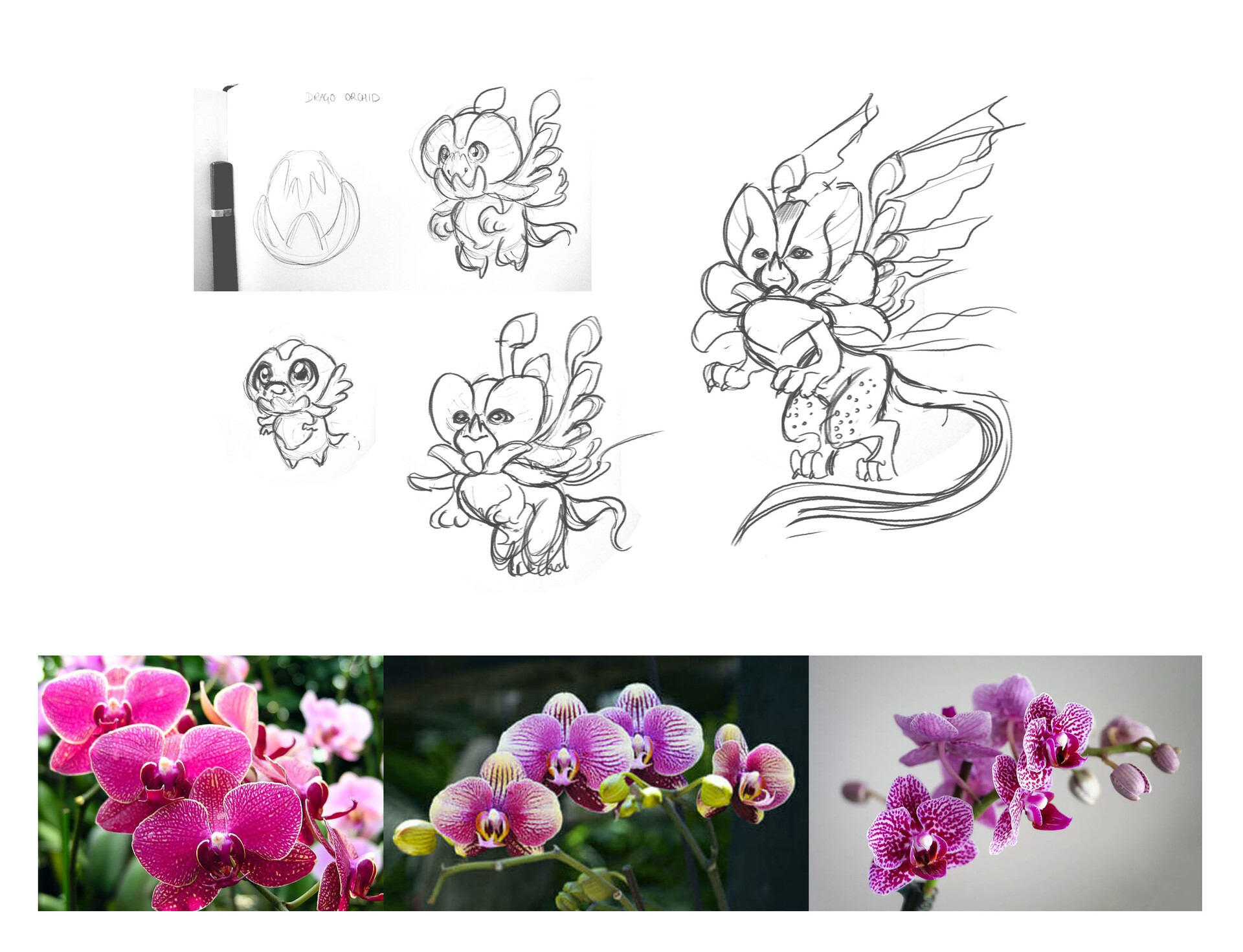 Orchid Dragon - Sketches and References