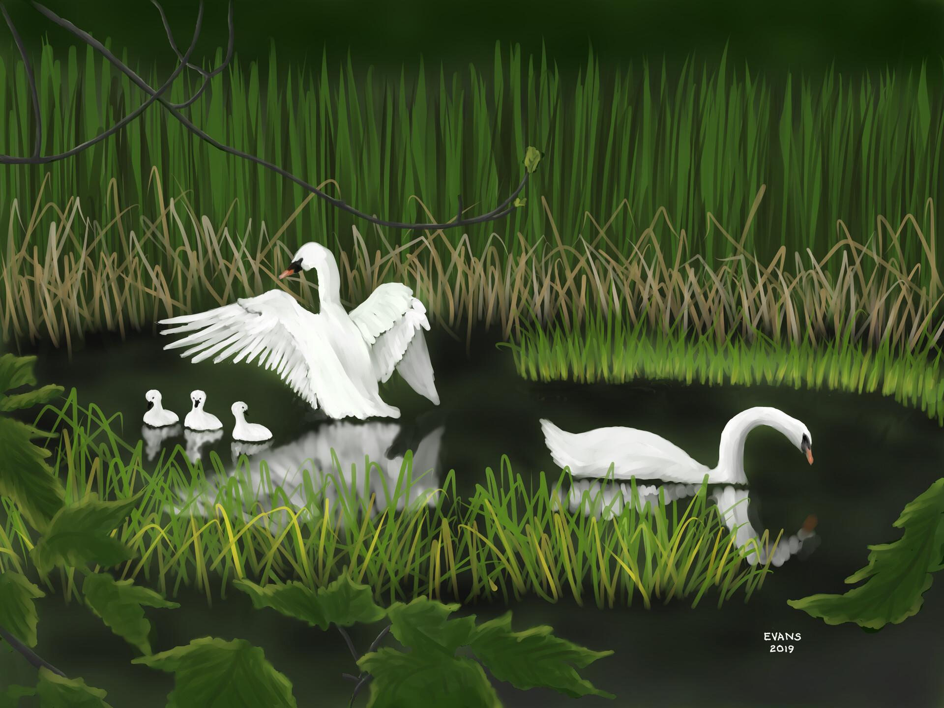 Swans Marsh Spring 2019