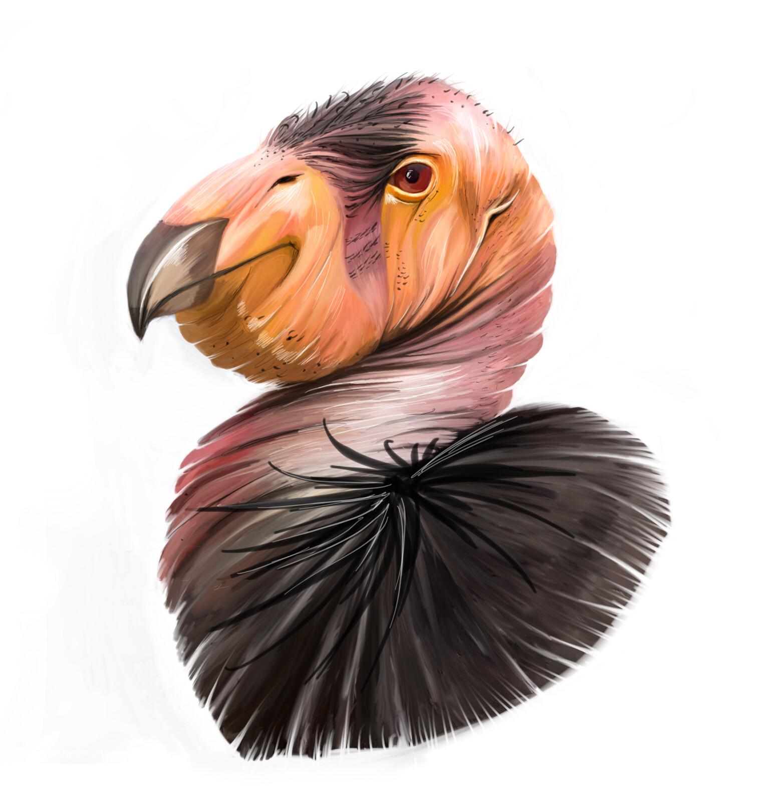California Condor - Painting